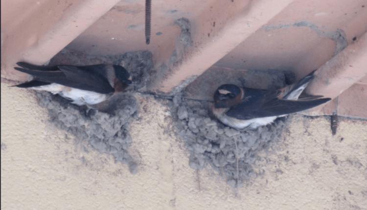 Springer-Birds-e1626296755240.png